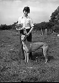 1979 - Greyhound and Pups at Saggart.       (M81).