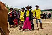Farmers dance their sapi (cow) down the field in competition for the most beautiful cows of the region at the annual Festival Sapi Sono'. Participants come from all four regions of Madura (Bangkalan, Sampang, Pamekasan, and Sumenep) and competitions began in the 1950s.  Racing the cows the following day is a ritual that has been around since the 14th century. Stadion R. Soenarto Hadiwidjojo in Pamekasan, Madura, Indonesia.