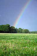 Rainbow over summer meadow during a heavy rain storm