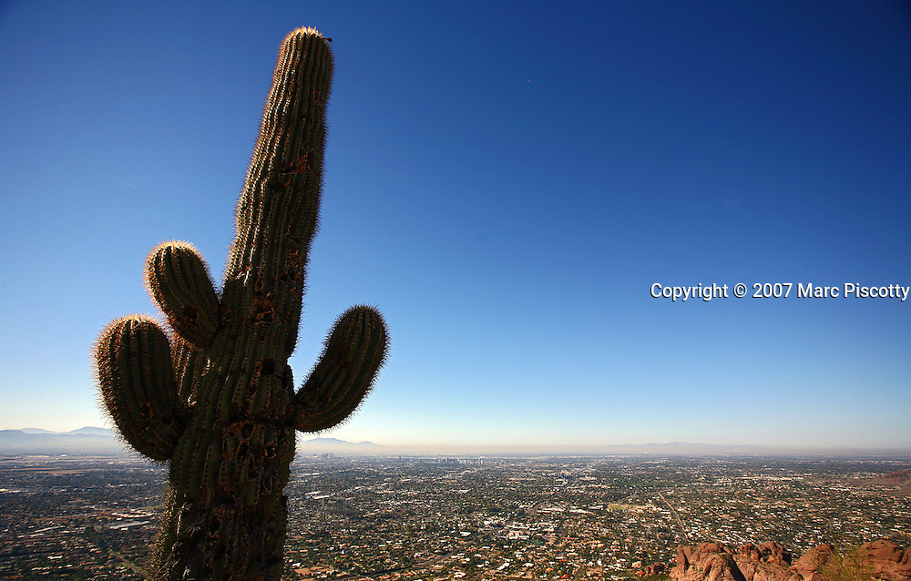 """SHOT 12/18/2007 - A saguaro cactus shoots skyward just off a trail on Camelback Mountain in Phoenix, Az. Camelback Mountain is a mountain of 2,704-foot elevation in Phoenix, Arizona. The name is derived from its shape, which resembles the two humps and head of a bactrian camel. A period of missing time amounting to almost a billion and a half years is represented by the division between the two rock formations which comprise the mountain. This mountain is a hiking destination for both locals and visitors to the Valley. It is located in the Camelback Mountain Echo Canyon Recreation Area between the Arcadia neighborhood of Phoenix and the town of Paradise Valley. Many hikers climb the demanding Summit Trail which is 1.2 miles one-way and gains more than 1,200 feet on its way to the peak. The Saguaro, pronounced """"sah-wah-roh"""", (Carnegiea gigantea) is a large, tree-sized cactus species in the monotypic genus Carnegiea. It is native to the Sonoran Desert in Arizona and California, United States and northern Mexico. Saguaros are slow growing, taking up to 75 years to develop a side arm. The arms themselves are grown to increase the plants reproductive capacity (more apices equal more flowers and fruit)..(Photo by Marc Piscotty/ © 2007)"""