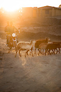 Motorcycle and goats near Hawzen, Gheralta area, Tigray, Ethiopia, Horn of Africa
