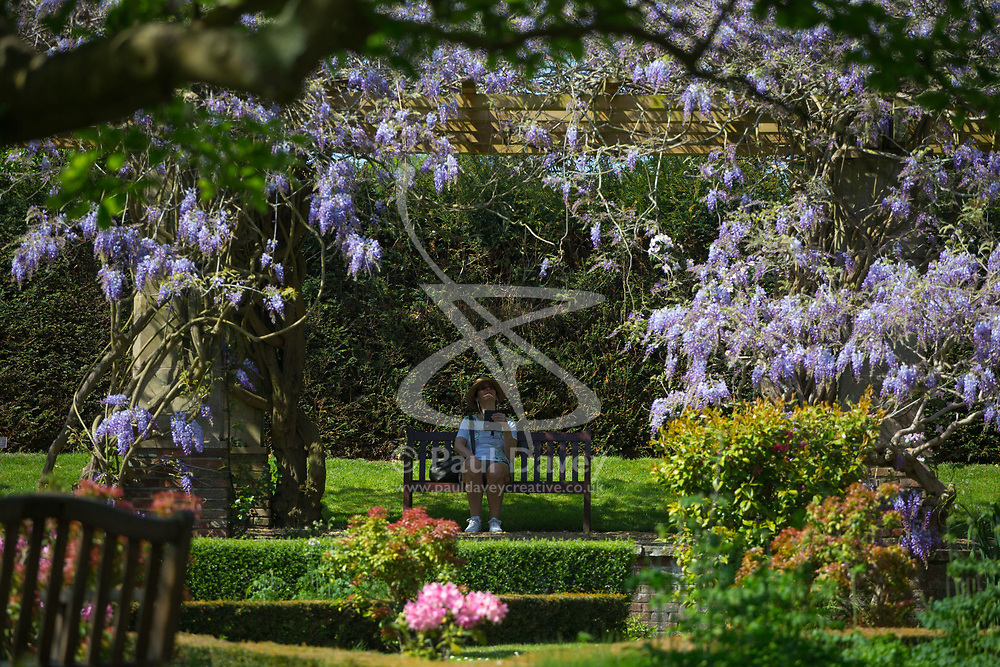 The wisteria pergola in the tranquil Stoke Poges Memorial garden. Stoke Poges, Buckinhamshire, May 06 2018.