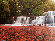 The colourful Jaspe Falls. Water erosion over thousands of years has worn the river bed, exposing the bright red mineral Jasper underneath in Venezuela