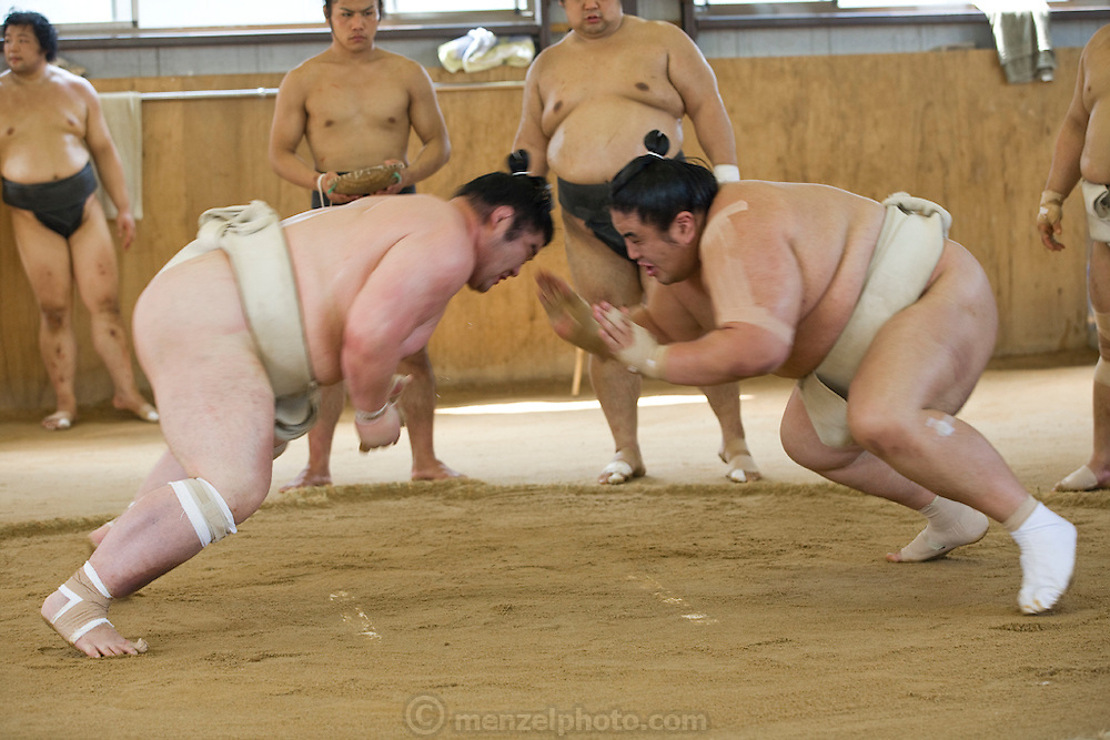 Masato Takeuchi (at right, his ring name is Miyabiyama), a sumo wrestler at the junior champion level (sekiwale) charges at his opponent during practice a tournament in Nagoya, Japan. (Masato Tekeuchi is featured in the book What I Eat: Around the World in 80 Diets.) MODEL RELEASED.