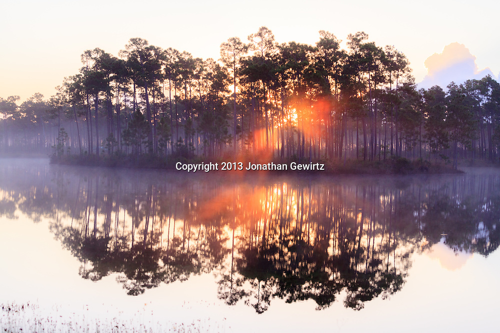 Sunrise fog and reflections at the Long Pine Key pond in Everglades National Park, Florida. WATERMARKS WILL NOT APPEAR ON PRINTS OR LICENSED IMAGES.<br /> <br /> Licensing: https://tandemstock.com/assets/97175384