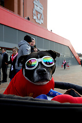 =A dog wearing sunglasses and a Liverpool shirt outside the ground before the Premier League match at Anfield, Liverpool.