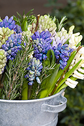 Cut hyacinths and rosemary being conditioned in a galvanised bucket