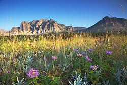 Wildflowers, Many Glacier, Glacier National Park