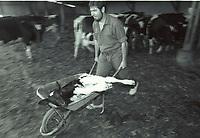 Luc Guyau, (21 juin 1948) à Thorigny (Vendée), est un agriculteur et syndicaliste français. Il a été président de la FNSEA de 1992 à 2001.