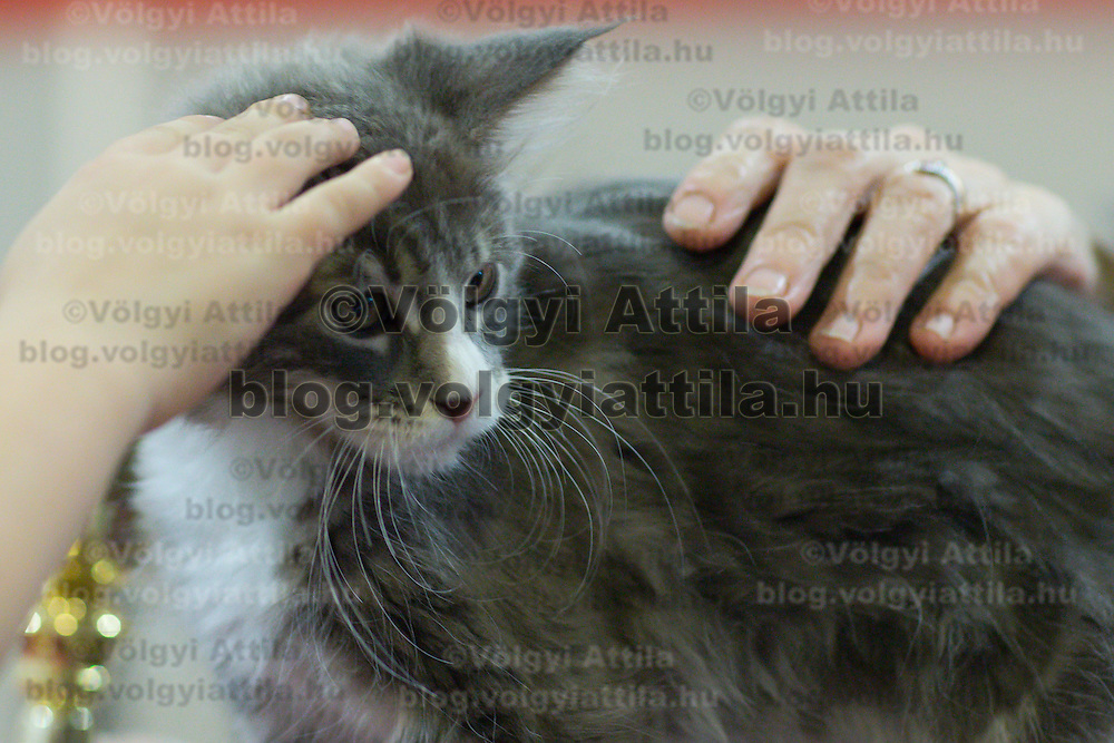 International cat show in Budapest, Hungary on October 04, 2015. ATTILA VOLGYI