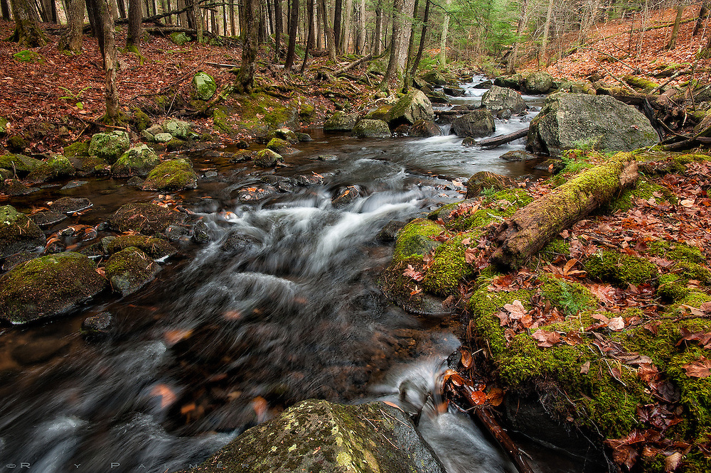 Sucker Brook, Adirondacks, NY.   I've never really believed in love at first sight. Yes, there's things that attract me, slap me in the face, and give me pause to set up and begin the camera process.  But even then, things have to sink in a bit as I filter them through my meager brain. She came out of a small pond, somewhere up above here.  Following opportunities between the hillsides that slope ever downward to the lake, somewhere below here.  I was on a mindless journey, to an end point I was unfamiliar with, and our paths crossed and coincided as I went. And so I followed her down, or vise versa, and I stopped to take her measure as I went.  Somewhere along the way she began to grow on me.  She was quiet, the water barely making a sound as she riffled and ran, but there was a music to it, nonetheless.  There was a steadiness in her makeup, and I could see she seldom rose above this level. She protected this forest as much as it protected her.  I came to appreciate the lushness in the garment she wore as she ran, the long-undisturbed debris like jewelery on her aspect.  And I was slowly taken in.  But in time she flattened out, lost her character, and surrendered herself to the bigger water of the lake. The lake was a disappointing destination, as destinations often are.  I returned back up the path, crossing and recrossing the stream several times, at points like this.  It is captured by a lens on a box that presents an image, and maybe it is love at first sight for those of you who like what you see here.  But for me it's just a small, still moment of a journey. We fall whether by a slap or an ache, and in the end they hurt the same.