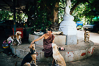 A monk is surrounded by a handful of dogs at Tham Krabok temple in Saraburi, Thailand.