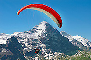 Paragliders in the Swiss Alps near the Eiger  mountain above the Grindelwald valley - Swiss Alps - Switzerland