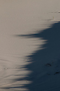 Shadows of beach grass flow across the foot of the dunes in the Provincelands.