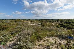 Wassenaar Meijendel, Zuid Holland, Nederland, Netherlands