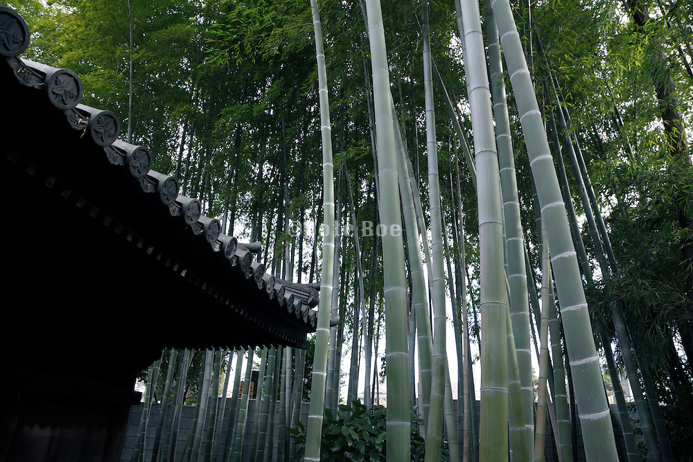 old traditional roof tiles with a bamboo grove growing around the house Japan