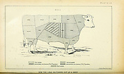 Beef cuts chart of Lisle Butchers from Cattle and dairy farming. Published 1887 by Govt. Print. Off. in Washington. United States. Bureau of Foreign Commerce (1854-1903)