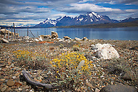 Wildflowers and Feather along a Lake in Patagonia. On the road to Paine National Park in Chile. Image taken with a Nikon D3x and 28-120 mm f/4 lens (ISO 100, 31 mm, f/16, 1/200 sec).