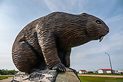 The Beaver Sculpture by Alex Lojczyc arrived at Beaverlodge in 2004, on Highway 43, County of Grande Prairie, Alberta, Canada. This statue is of a North American beaver (Castor canadensis). [By the way, the now-extinct Giant Beaver (Castoroides ohioensis) was the largest rodent ever in North America. It lived from 130,000-10,000 years ago, in the Pleistocene Epoch. Skeletal remains of this extinct rodent were first discovered in 1837. Castoroides ohioensis measured up to 8 feet long, weighing 480 pounds, and differed in appearance from the modern sculpture pictured here.]