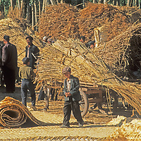 Uygar men and boys barter for reeds to be made into floor mats in Kashgar (Kashi), a town on the ancient Silk Road in Xinjiang, China.