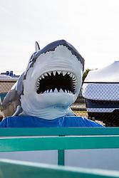 Plastic Shark on a dock in Montauk, NY