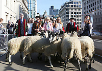 Mary Berry Starts 'The Great Sheep Drive Over London Bridge' To Open The Wool Fair 2017, London Bridge, London UK, 24 September 2017, Photo by Brett D. Cove
