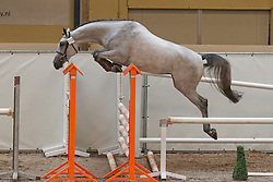 193 - Caronette<br /> KWPN Paardendagen Ermelo 2010<br /> © Dirk Caremans
