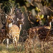 animals, wildflife, deer