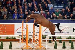 074, Fafa Des Forets<br /> KWPN Stallionshow - 's Hertogenbosch 2018<br /> © Hippo Foto - Dirk Caremans<br /> 31/01/2018