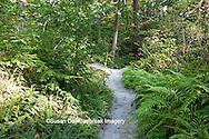 65821-00104 Trail through Fern Garden in H.L. Blomquist Garden at Sarah P. Duke Gardens, Durham, NC