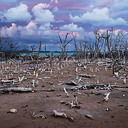 After almost three years there are still large areas of dead mangroves in Puerto Rico, like this in Cabo Rojo, after hurrican Maria. Mangroves are a shoreline's best known defence during large storms and important habitat for many bird and fish species.