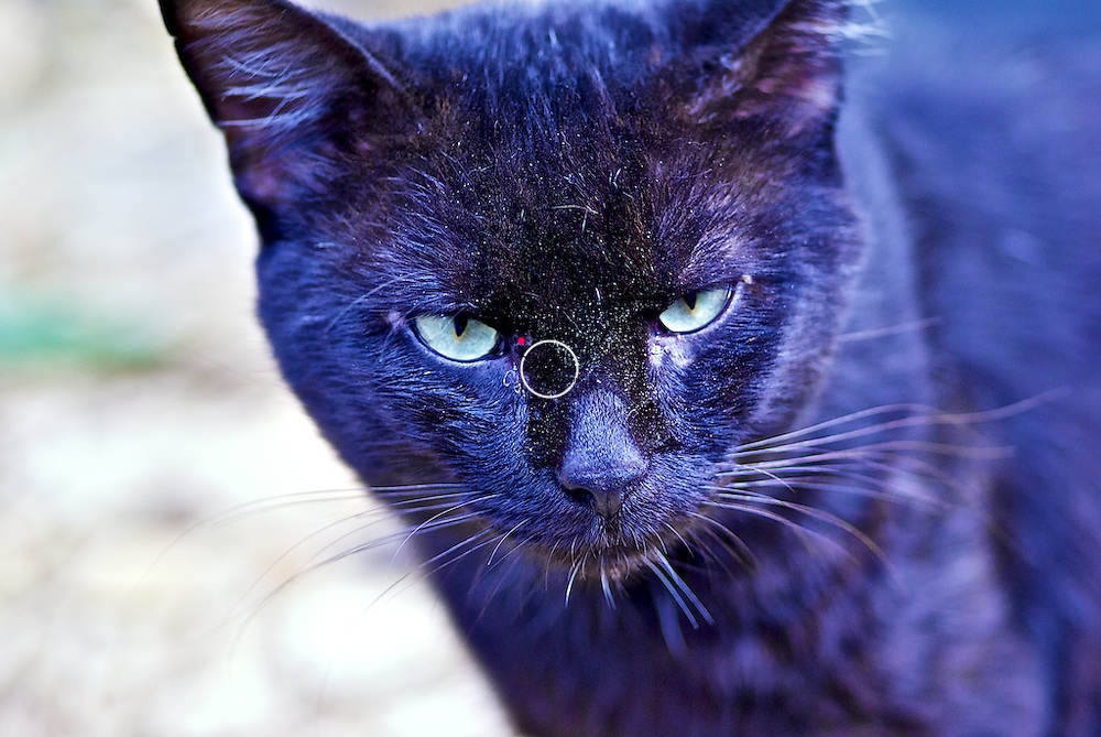Blackie the Black Cat