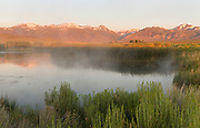 Hot Springs and Dechambeau Ponds at Dawn, Mono Basin National Forest Scenic Area, California