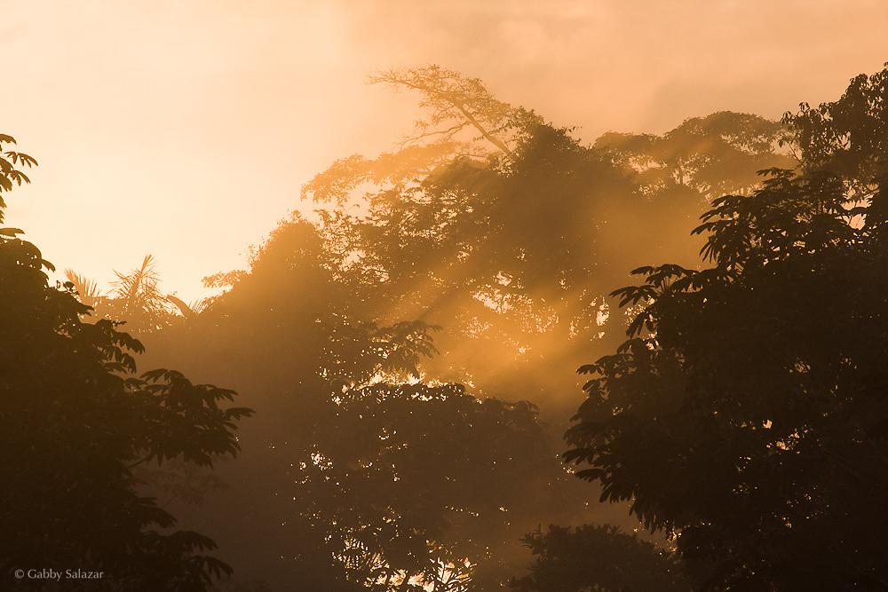 Sunrise. Pontificia Universidad Catolica del Ecuador, Estacion Biologica Yasuni, Yasuni National Park, Ecuador.