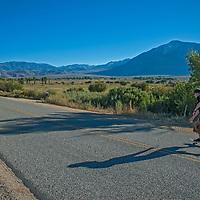 Ben Wiltsie rides a skateboard on Old Sherwin Grade Road under the Eastern Sierra Nevada in the Owens Valley near Bishop California.
