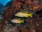 Molasses Reef, Key Largo, FL