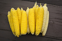 Fresh corn on the cob, yellow and white ready to cook.