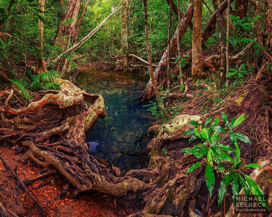 A beautiful little waterhole amongst tropical rainforest on Hinchinbrook Island.<br /> <br /> Code: TAQT0003<br /> <br /> Limited Edition of 45 Prints