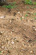 Soil detail. Sand. Domaine Tracot Dubost, Beaujolais, France