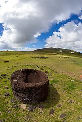 Moai Topknot