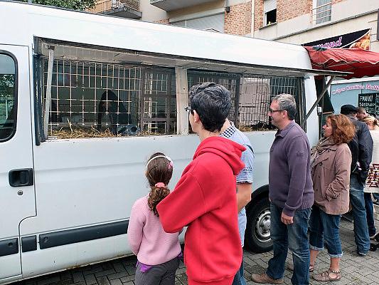 Frankrijk, Lille, 18-8-2013Lille ligt in een sterk de verarmde regio noordwest. Het is de hoofdstad van Frans Vlaanderen, van de regio Nord Pas de Calais en van het Noorder departement. Op de markt in Wazemmes. Een smeltkroes van culturen en bevolkingsgrtoepen, waarbij de noord afrikanen , moslims, de sterk vertegenwoordigd zijn. Dieren, huisdieren worden vanuit een busje verkocht. dierenleed,dierenhandel,huisdier, pups,pup,puppy,honden, cavias. Handel.Foto: Flip Franssen/Hollandse Hoogte