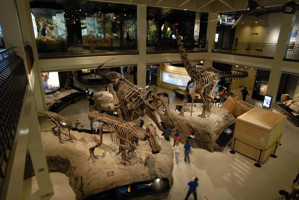 Dinosaur exhibit in the atrium of the Houston Museum of Science at Hermann Park. Photo by Bob Daemmrich <br /> ©Bob Daemmrich