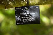 Tree species identification label, National arboretum, Westonbirt arboretum, Gloucestershire, England, UK - Japanese Maple, 'Seiryu' Dissectum