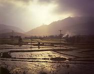 Rice paddies reflect soft sunlight, landscape near Vinh, Nghe An Province, Southeast Asia, 2012.