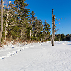 Snowshoe tracks on a frozen beaver pond on newly conserved land in Epping, New Hampshire.
