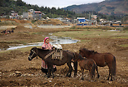 A Hmong woman stands besides her horses at Bac Ha's market, Vietnam, Southeast Asia