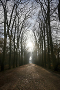 The avenue of trees leading to Chateau Chenonceaux in the Loire Valley, France