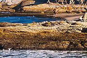 Morning light on rocky coast and surf, Montana de Oro State Park, California USA