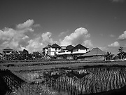 31 JULY 2017 - UBUD, BALI, INDONESIA: Hotels and tourists oriented businesses surround a rice field in Ubud, Bali. Bali's rice growing tradition is threatened by the tourist boom as more and more tourist housing is built on land that used to be used for growing rice.     PHOTO BY JACK KURTZ