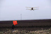 "Crop dusting. Spraying pesticides on agricultural crops in California. The worker holding the flag (known as a ""flagger"") marks the row where the duster needs to spray next. Flagman at the end of rice field, with seeder plane approaching."
